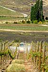 Tractor spraying in vineyards