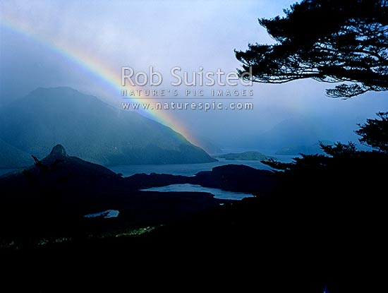 Moody rainbow under beech tree branches in Back Valley. The Monument (466m) left, Hope Arm of Lake Manapouri beyond, Fiordland National Park, Southland District, Southland Region, New Zealand (NZ) stock photo.