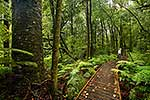 Waipoua rainforest bush walk