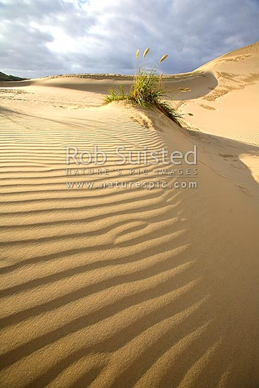 Giant sand dunes on (90) Ninety Mile Beach with sand textures and ripples, Te Paki, Cape Reinga, Far North District, Northland Region, New Zealand (NZ) stock photo.