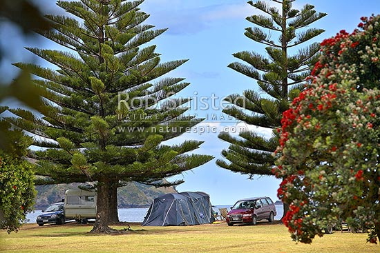 Summer holiday tenting in campground at Matauri Bay. Pohutukawa flowering in camping site, Matauri Bay, Far North District, Northland Region, New Zealand (NZ) stock photo.