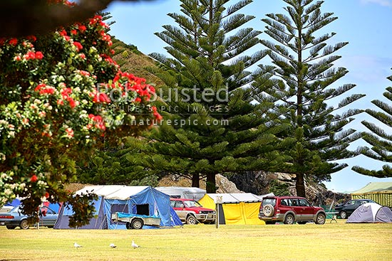 Summer holiday tenting in motorcampground at Matauri Bay. Pohutukawa flowering in campsite, Matauri Bay, Far North District, Northland Region, New Zealand (NZ) stock photo.