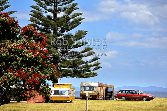 Summer holiday tenting and caravaning in motorcampground at Matauri Bay. Pohutukawa flowering in camping site, Matauri Bay, Far North District, Northland Region, New Zealand (NZ) stock photo.