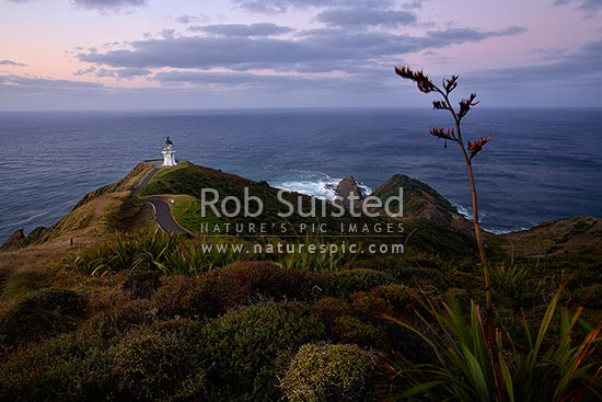 Cape Reinga (Te Rerengawairua) lighthouse at dusk and Spirits Leap. NZ Flax flower head in foreground, Cape Reinga, Far North District, Northland Region, New Zealand (NZ) stock photo.