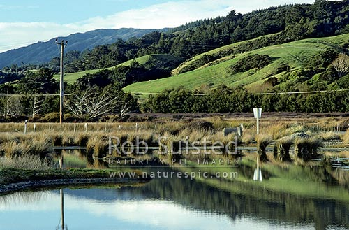Pauatahanui Wildlife Management Reserve and wetlands in Pauatahanui inlet, Pauatahanui Inlet, Porirua City District, Wellington Region, New Zealand (NZ) stock photo.
