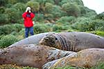 Photographing Elephant Seals