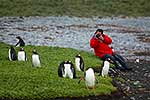Photographing Gentoo Penguins