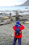 Filming Southern Elephant Seals