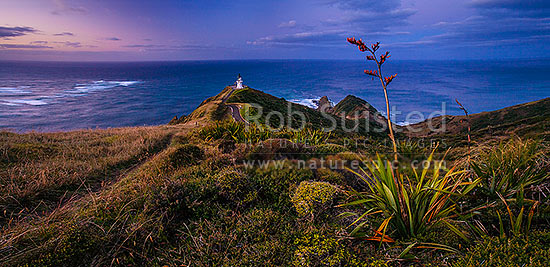Cape Reinga (Te Rerengawairua) lighthouse at dusk above Columbia Banks and Spirits Leap., North Cape. Flax bush (Phormium sp.) in foreground, Cape Reinga, Far North District, Northland Region, New Zealand (NZ) stock photo.
