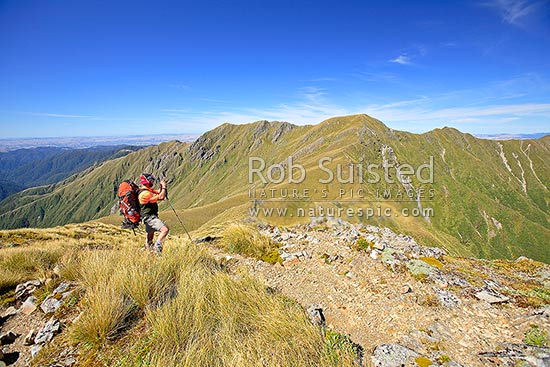 Tramper or hiker photographing Mount (Mt) Hector (1529m) on the Southern Crossing of the Main Range of the Tararuas, from Field Peak, Tararua Forest Park, Kapiti Coast District, Wellington Region, New Zealand (NZ) stock photo.