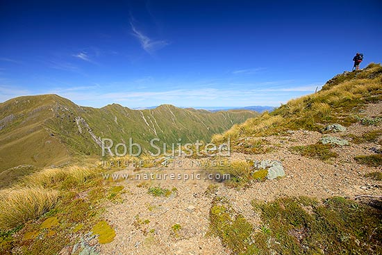 Tramper or hiker looking towards the Southern Crossing of the Main Range of the Tararuas, from Field Peak. Mount (Mt) Hector far left, Tararua Forest Park, Kapiti Coast District, Wellington Region, New Zealand (NZ) stock photo.