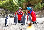 Tourists with King Penguins