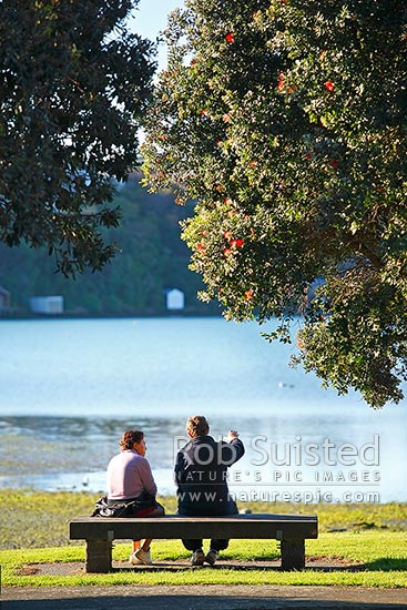 Two people sitting, contemplating and talking on a park bench next to the sea and pohutukawa trees, Pauatahanui Inlet, Porirua City District, Wellington Region, New Zealand (NZ) stock photo.