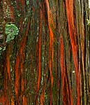 Native NZ Totara bark