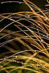Wet tussock grasses