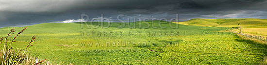 Dark moody stormy skies brewing above lush summer grass farmland in Central Hawke's Bay, Dannevirke, Tararua District, Manawatu-Wanganui Region, New Zealand (NZ) stock photo.