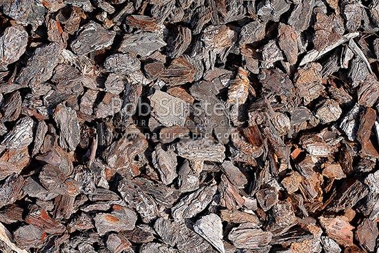 Pine tree bark chips on garden texture pinus radiata