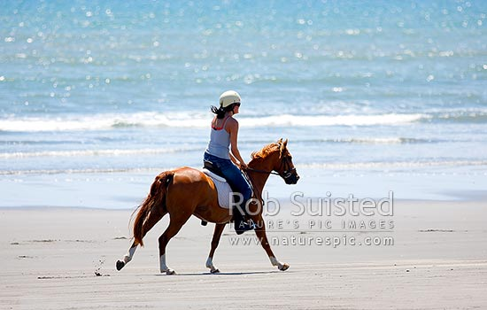 A woman riding her horse on beach with sea behind, Peka Peka Beach, Kapiti Coast District, Wellington Region, New Zealand (NZ) stock photo.