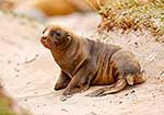 Cute sea lion pup