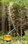 Felling of plantation of trees