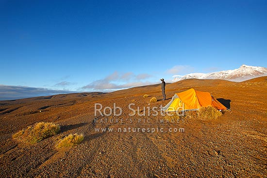 Trampers tent camp at dawn on the Round the Mountain Track of Mount Ruapehu. The barren Rangipo Desert landscape. Mt Ruapehu peak behind, Mt Ruapehu, Ruapehu District, Manawatu-Wanganui Region, New Zealand (NZ) stock photo.