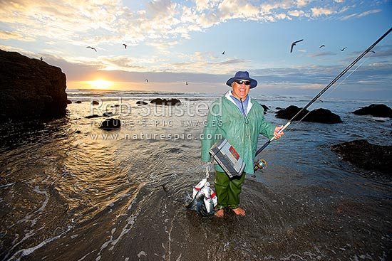 Recreational fisherman surfcasting from beach with a good catch of Kahawai fish (Arripis trutta). Holding fishing rod and tackle box at sunset and low tide, Marokopa, Waitomo District, Waikato Region, New Zealand (NZ) stock photo.