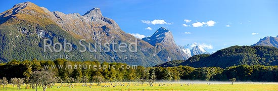 Sheep grazing in morning mist below Mt Nox (1940m), Mt Chaos (1995m) and Poseidon Peak (2208m). Dart River valley at Paradise, Glenorchy, Queenstown Lakes District, Otago Region, New Zealand (NZ) stock photo.