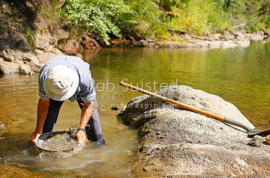 Gold-miner panning for gold in river gravels. Goldpanning, Murchison, Buller District, West Coast Region, New Zealand (NZ) stock photo.