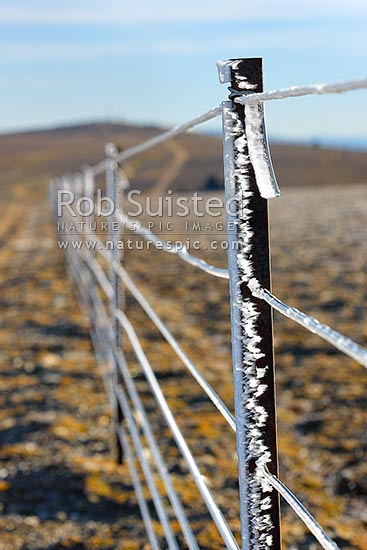 High country farm fenceline wires encrusted with ice from freezing cloud and frost. Old Man Range in autumn. 1600 metres high. Warratah post, Alexandra, Central Otago District, Otago Region, New Zealand (NZ) stock photo.