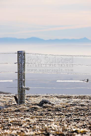 High country farm fenceline wires encrusted with ice from freezing cloud and frost. Old Man Range in autumn. 1600 metres high, Alexandra, Central Otago District, Otago Region, New Zealand (NZ) stock photo.