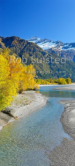 Matukituki River flowing under Mt Avalanche (2606m), and past Cameron Flat, with autumn coloured trees. Vertical panorama, Mount Aspiring National Park, Queenstown Lakes District, Otago Region, New Zealand (NZ) stock photo.