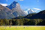 Sheep farming amongst mountains