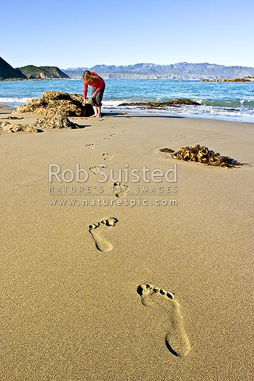 Person on beach exploring sea life and seaweed in the intertidal zone near rockpools. Footprints in sand leading to waters edge, Wellington, Wellington City District, Wellington Region, New Zealand (NZ) stock photo.