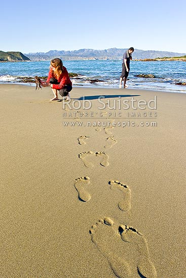 People on beach exploring sea life and seaweed in the intertidal zone near rockpools. Footprints in sand leading to waters edge, Wellington, Wellington City District, Wellington Region, New Zealand (NZ) stock photo.