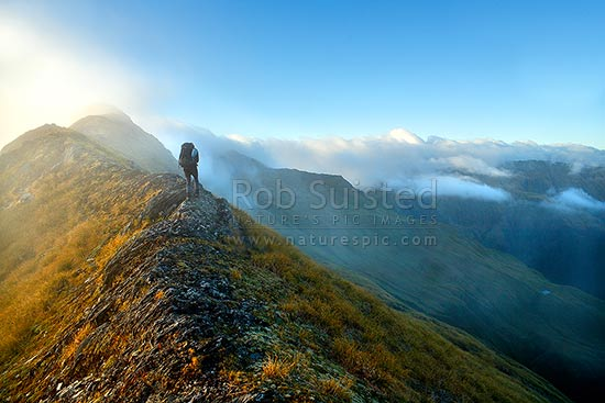 Tramper walking along the Thomas Range in alpine tussock and afternoon mist toward Mount Trig 'N' Tarn (1474m), Haast, Westland District, West Coast Region, New Zealand (NZ) stock photo.