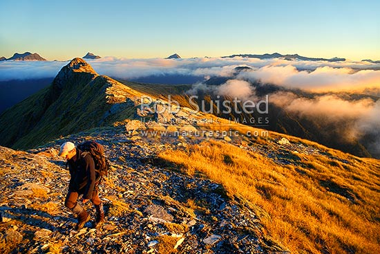 Tramper walking in the alpine sunset over the Thomas Range, with sea mist rolling in. Mount Trig 'N' Tarn (1474m) left. Thomas Valley in cloud at right, Haast, Westland District, West Coast Region, New Zealand (NZ) stock photo.