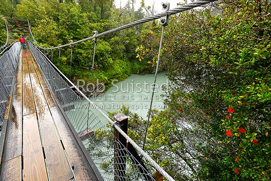 Walkers on the Hokitika Gorge footbridge swingbridge spanning the Hokitika River with walkway into native forest. River swollen from rain. Flowering rata vine (Metrosideros fulgens, Family: Myrtaceae), Hokitika, Westland District, West Coast Region, New Zealand (NZ) stock photo.