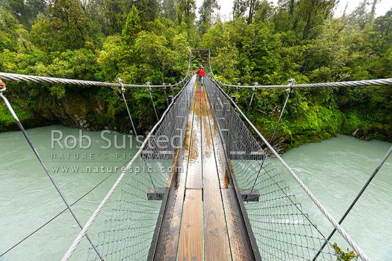 Walkers on the Hokitika Gorge footbridge swingbridge spanning the Hokitika River with walkway into native forest. River swollen from rain, Hokitika, Westland District, West Coast Region, New Zealand (NZ) stock photo.