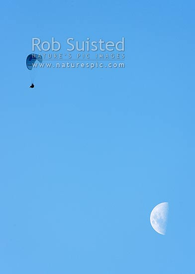 Paragliding. Tandem paragliders parapenting in evening, with large moon background, above Queenstown (waning gibbous moon), Queenstown, Queenstown Lakes District, Otago Region, New Zealand (NZ) stock photo.