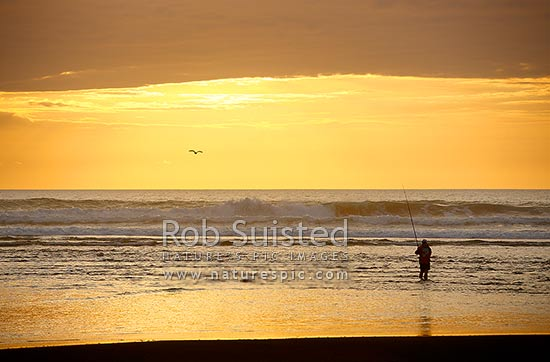 Lone fishermen surfcasting in waves with dramtic sunset behind. Fishing on remote west coast beach, Marokopa, Waitomo District, Waikato Region, New Zealand (NZ) stock photo.