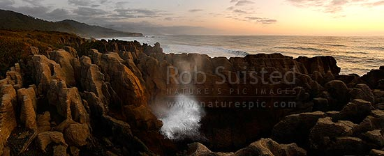 Pancake rocks and blowhole in action at Dolomite Point coastline. Paparoa National Park. 30 million year old alternating layers of eroded limestone. Panorama, Punakaiki, Buller District, West Coast Region, New Zealand (NZ).