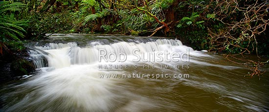 Purakaunui River. Forest stream and small cascading waterfall or riffle in lush New Zealand bush rainforest. Panorama, Catlins, Clutha District, Otago Region, New Zealand (NZ) stock photo.