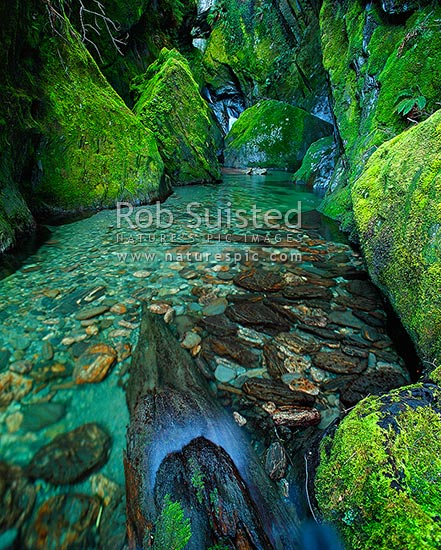 Mossy green side creek in the Haast River Valley. Square format, South Westland, Westland District, West Coast Region, New Zealand (NZ) stock photo.