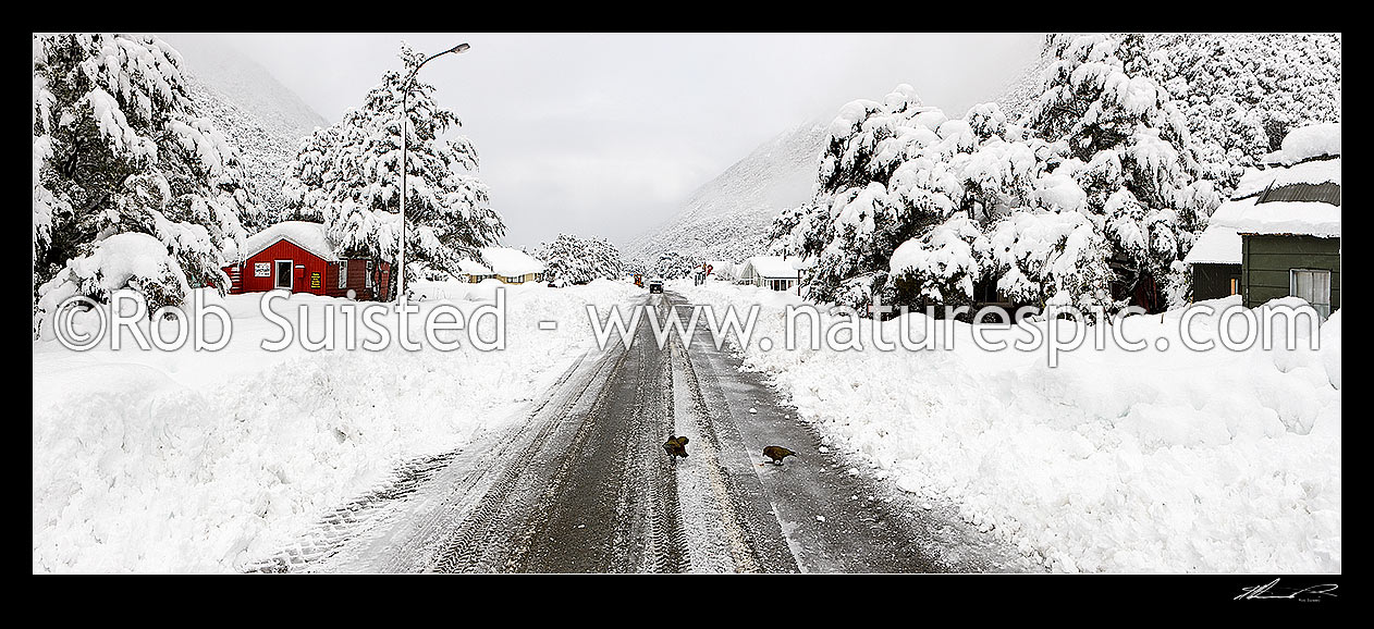 Image of Arthur's Pass township in heavy winter snow. State Highway 73 to West Coast. Panorama looking south east with Keas playing on main road (Nestor notabilis), Arthur's Pass National Park, Selwyn District, Canterbury Region, New Zealand (NZ) stock photo image