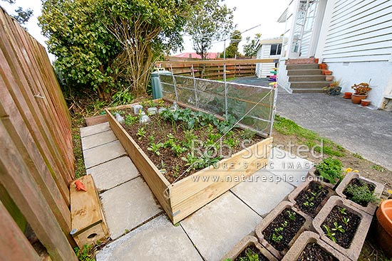 Raised Bed Vegetable Gardening In Backyard. Domestic Self Sufficiency Garden With Herbs ...