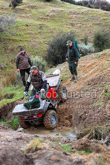 Wild pig hunting, early morning pre-dawn start with hunters and dog using 4x4 quad bike. Max and Andy Lyver, Wairarapa, Masterton District, Wellington Region, New Zealand (NZ) stock photo.