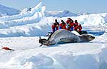 Antarctic tourists viewing wildlife