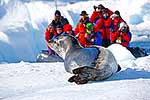 Antarctic tourist viewing wildlife
