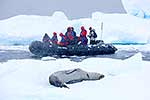 Antarctic tourist viewing seal