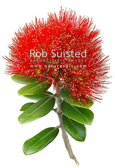 Red Christmas Tree Ideas